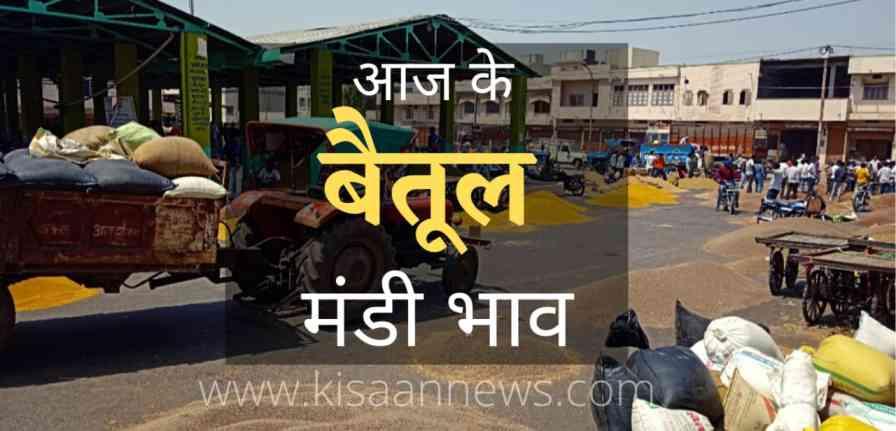 betul mandi bhav